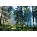 Картина Startonight DualView Път в гората, светлина в тъмнотo, 40 x 60 см