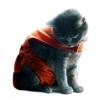 Chiloti pentru pisici tip salopeta sanitara - PetaS marime M ,33 cm