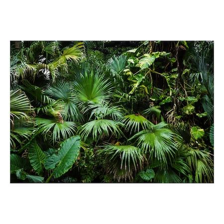 Fototapet vlies vlies - Jungla Insorita - 400 x 280 cm
