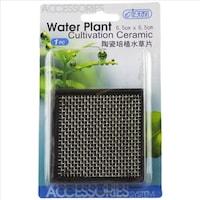 cort cultivare plante