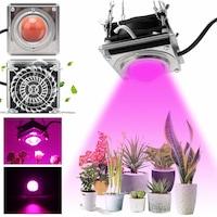 lampe pour plante