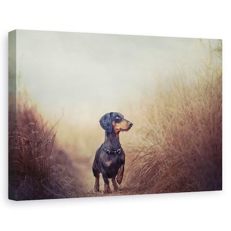 Tablou canvas - Natura Ma Cheama Si Trebuie Sa Plec.., Caini, Animale, Dimineata, Caine, Pet, 20 x 30 cm