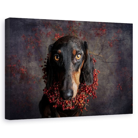 Tablou canvas - Pentru Toamna, Caini, Studio, Animal, Portret, 20 x 30 cm