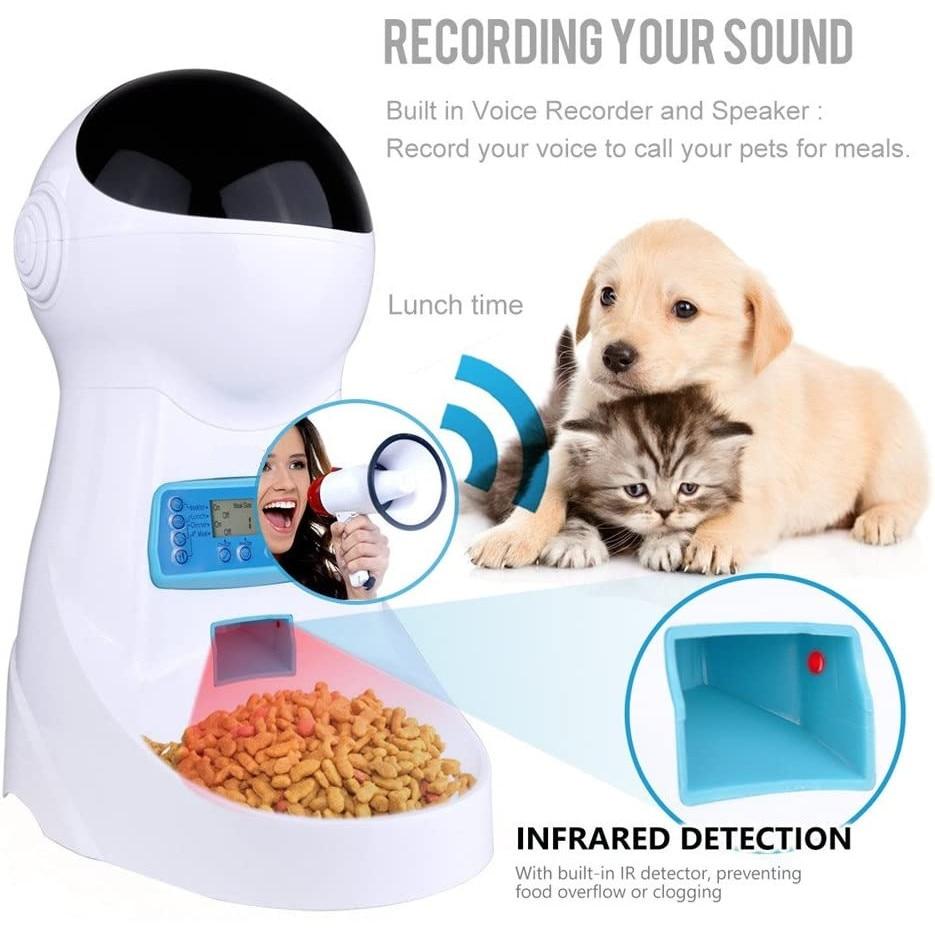 Pisica gratuita fara inregistrare fara inregistrare