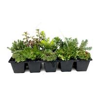 set picuratoare pentru plante