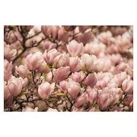 Öntapadó fotótapéta, Rózsaszín magnólia, 110x170 cm
