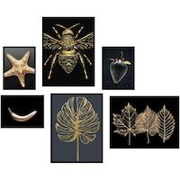 Комплект от 6 декоративни картини Heinner Home, Gold Star