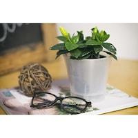 phalaenopsis ikea