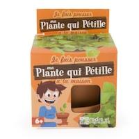 kit plante