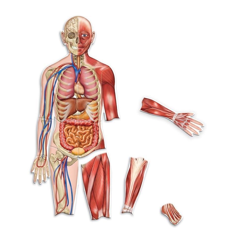 punctele corpului uman pentru erecție